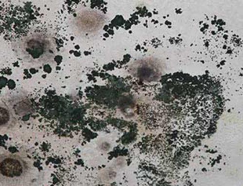 Kako pravilno odstraniti plesen?