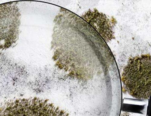 Plesen v stanovanju: Kako pravilno odstraniti plesen?